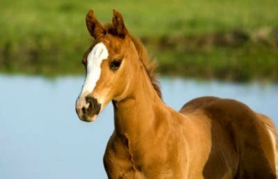 Training Young Horses -An introduction