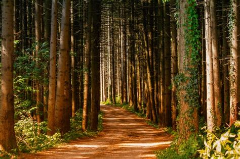 1000+ Interesting Forest Path Photos · Pexels · Free Stock