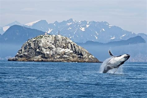 Impact of whaling on the ocean carbon cycle - Journalist's